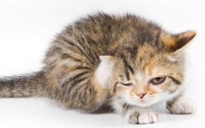 Una alergia es una respuesta del sistema inmune de nuestra mascota frente a un elemento extraño en su organismo denominado Alérgeno.